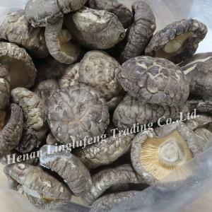 China high quality best price Flower mushroom